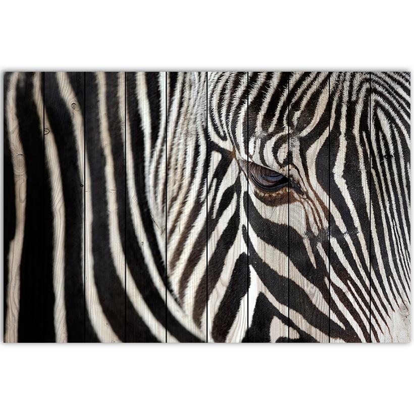 картина зебра