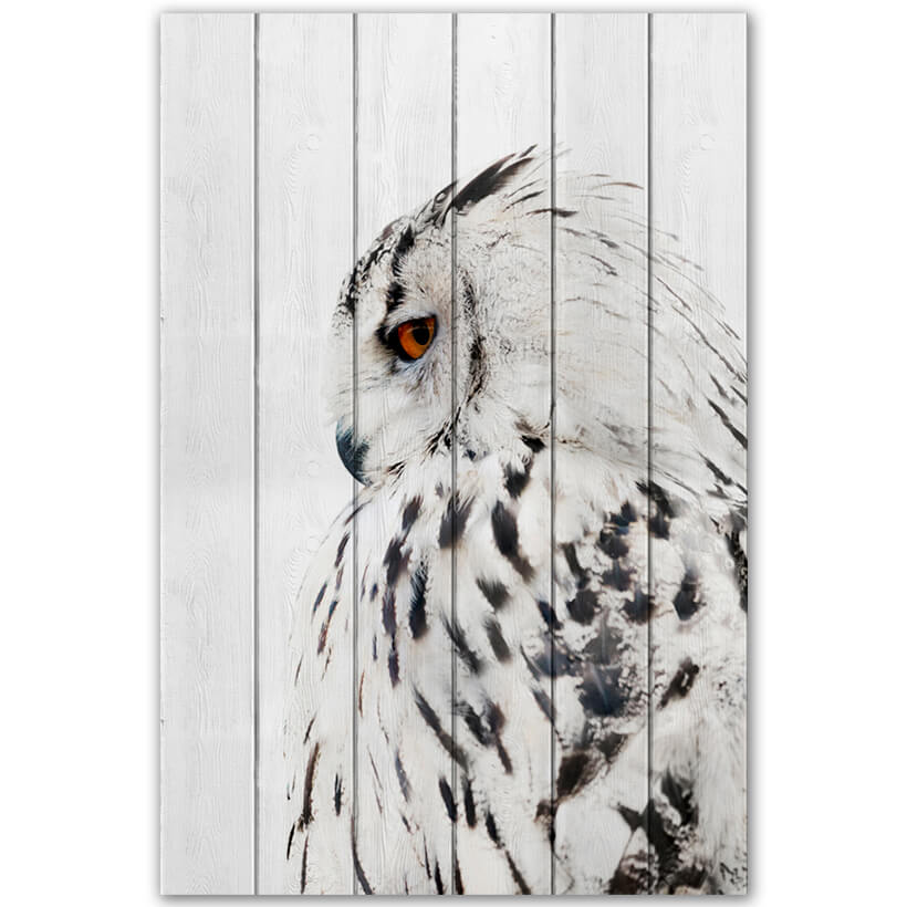 картина Белая сова