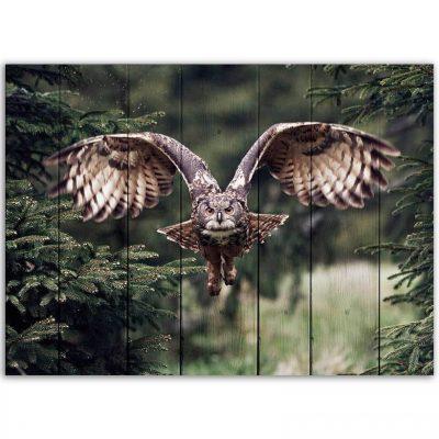 картина сова