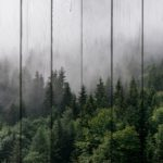 картина лес