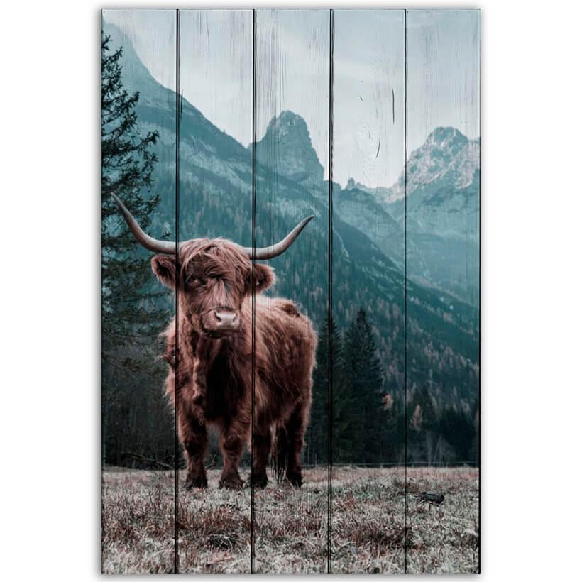 картина шотландский бык