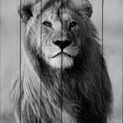 картина лев