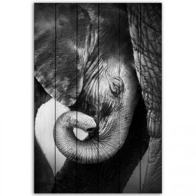 картины слоны