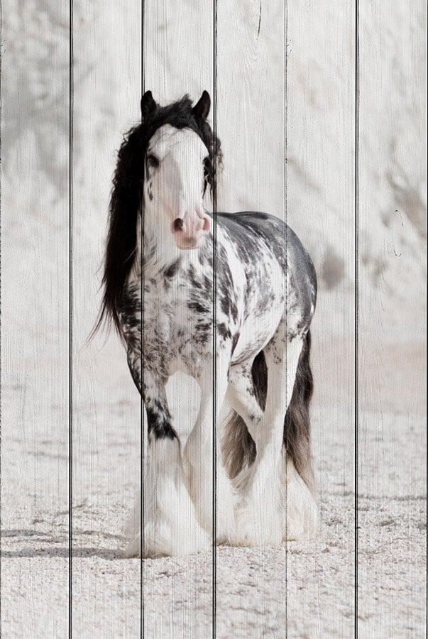 картина ирландская лошадь