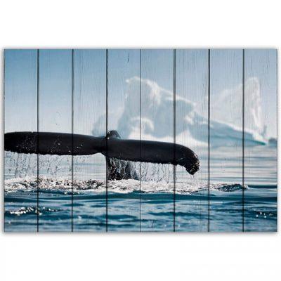 картина хвост кита