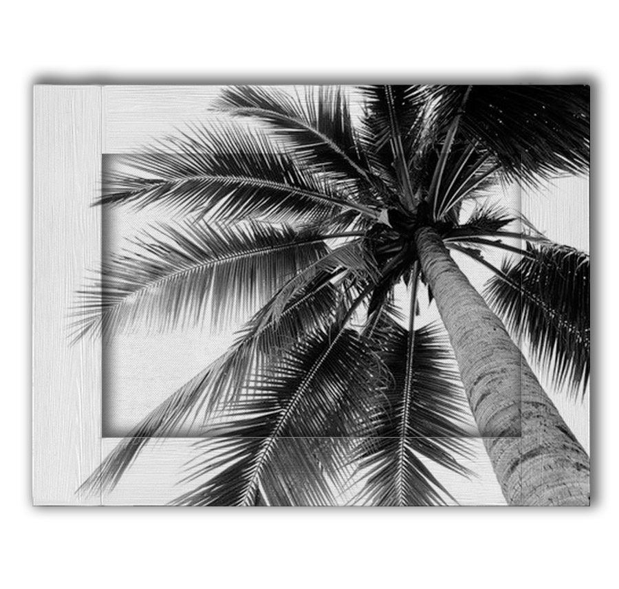 palma1-min
