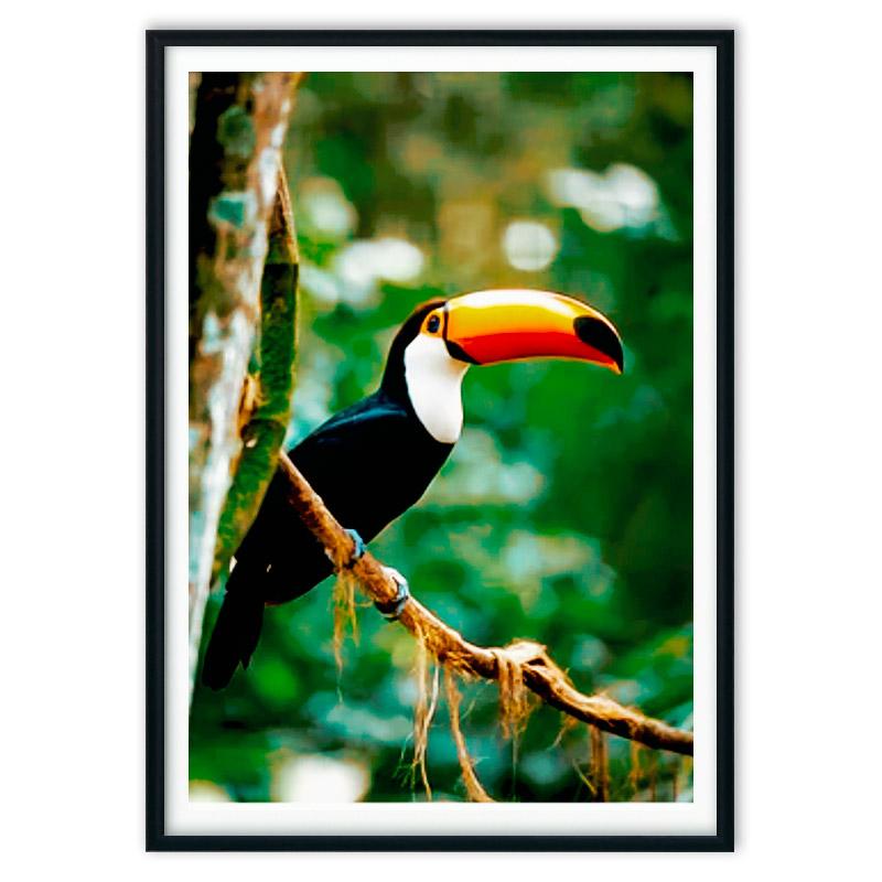 poster_jungle-6-1