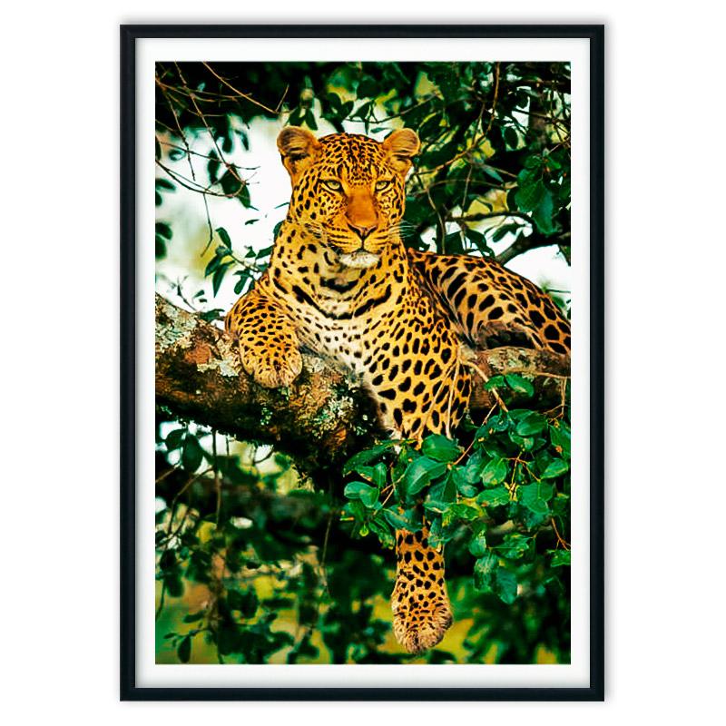 poster_jungle-6-5