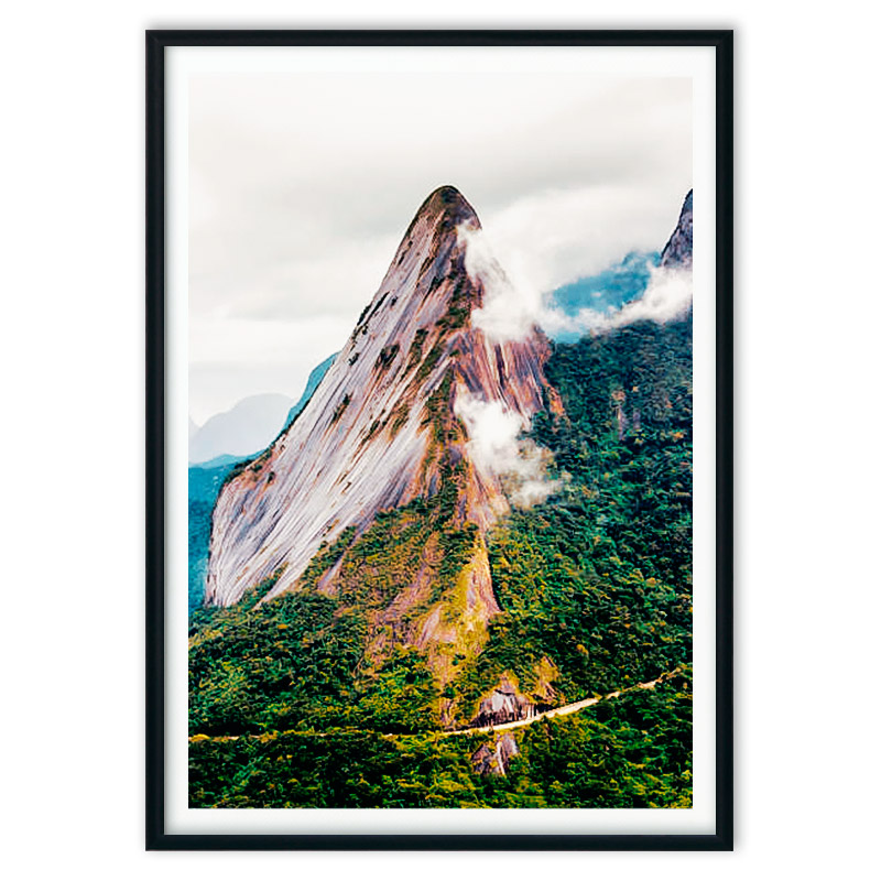 poster_jungle-6-6