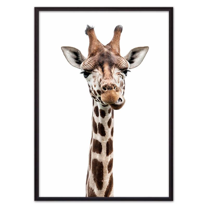 Жираф_1_жует