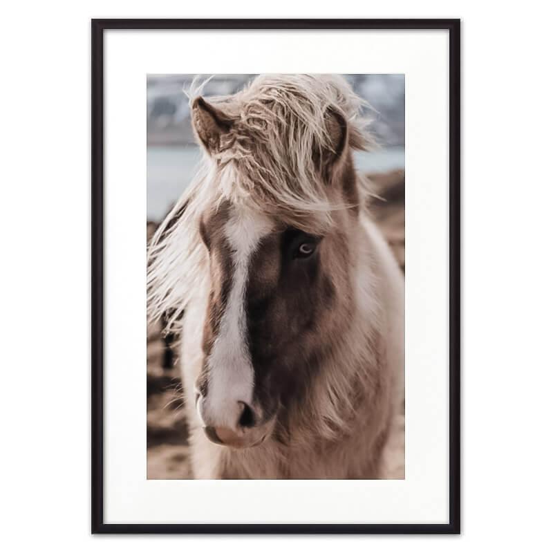 Скандинавская_лошадь_паспарту