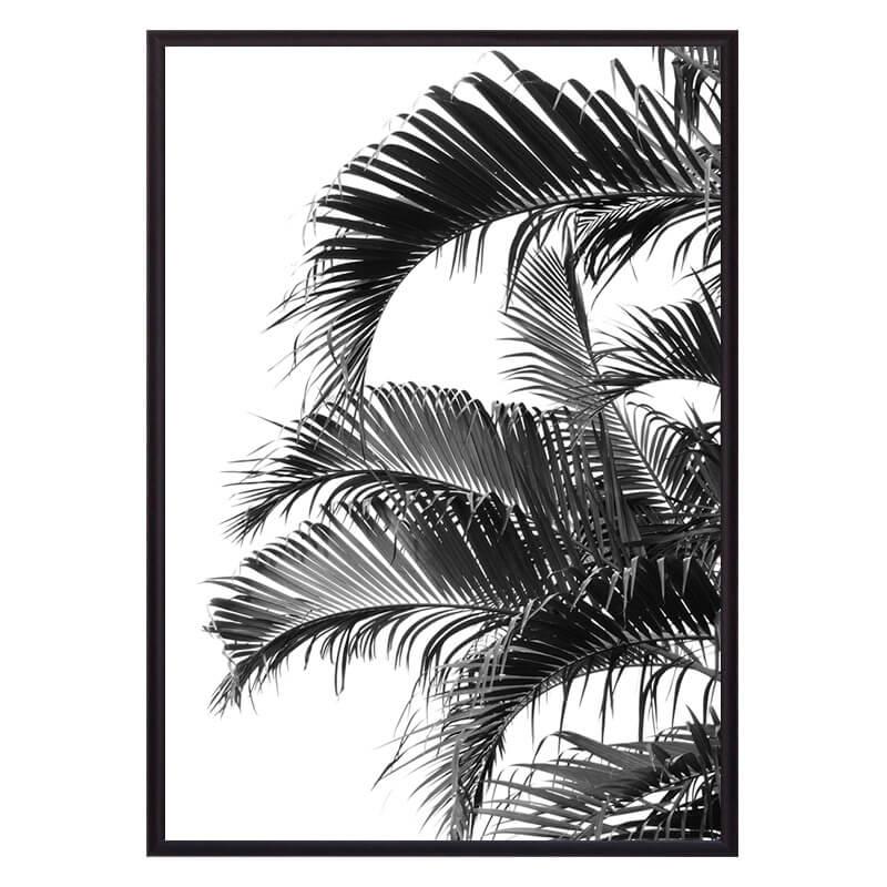 Листья_пальмы