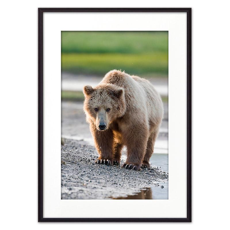 Медведь_2