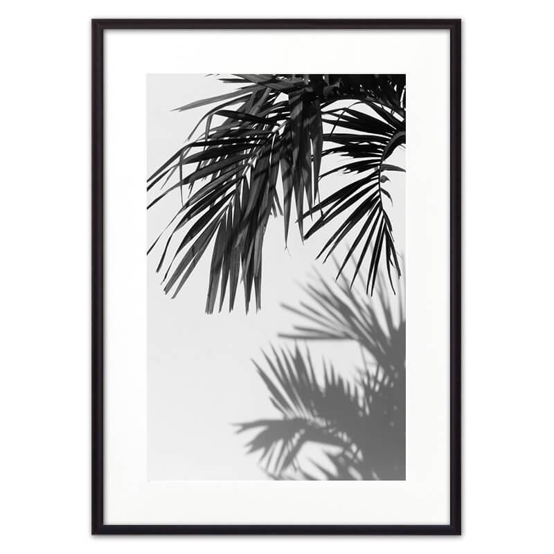 Тень_от_пальмы