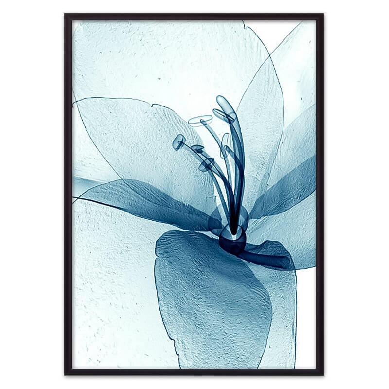 is_рентген_цветок