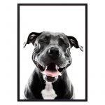 улыбающийся пес постер