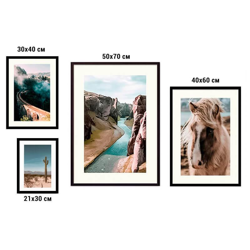 kollag-4-priroda-animal-15
