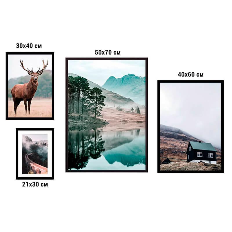 kollag-4-priroda-animal-38