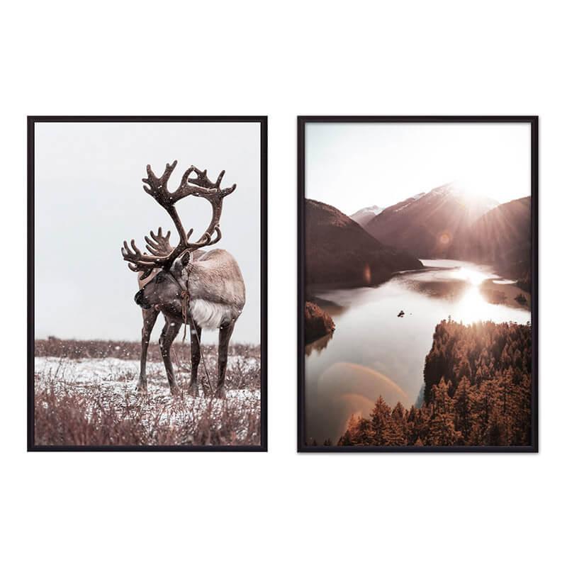 kollag-priroda-animal-56
