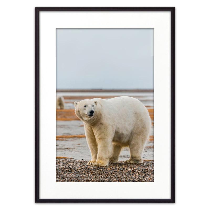 polarniy-medved
